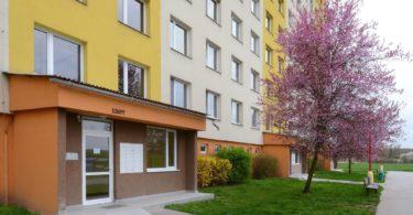 zateplený panelový dům v ulici Kojetická, rozkvetlý strom