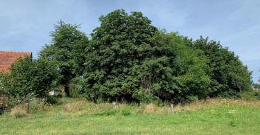 zadní strana stavebního pozemku, strom, pole, keře