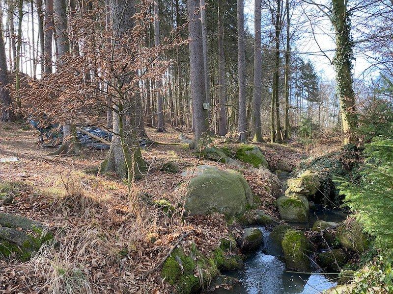 říčka s kameny, jehličnatý les