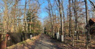 nezpevněná příjezdová cesta mezi stromy a ploty, stromy, les,